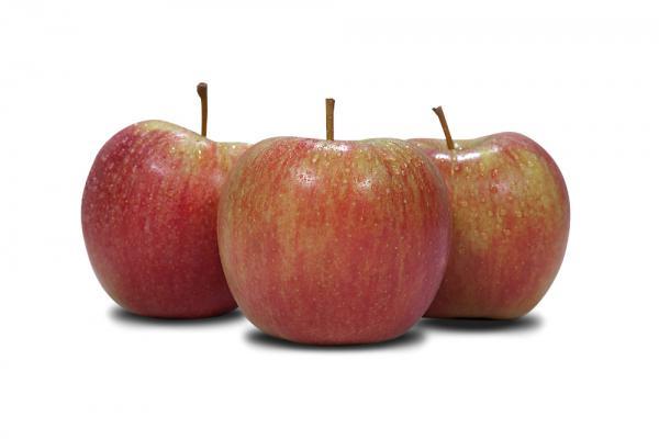Jabłko Szampion