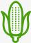 SUN-SAD ikona kukurydza