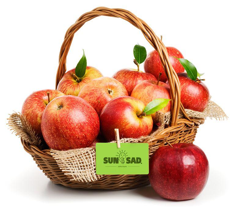 SUN-SAD koszyk z jabłkami